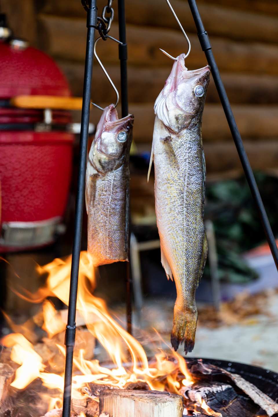 Walleyes cold smoking over an outdoor fire at the Milkweed Inn on October 21st, 2019.