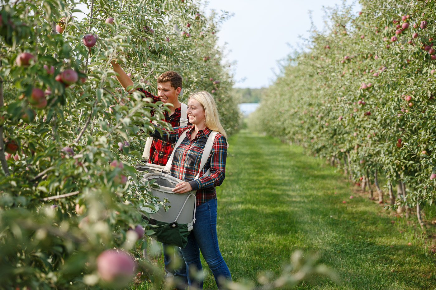 Abby, and Charlie Fahey, pick apples on the grounds of their family run organic apple orchard, Peck and Bushel, in Colgate, WI.